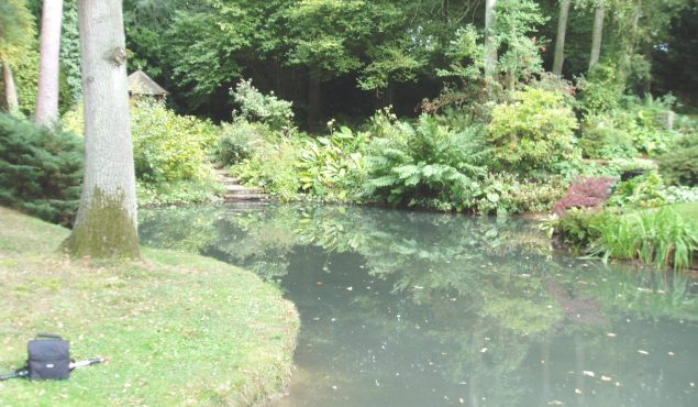 pond after algae cleaner was installed