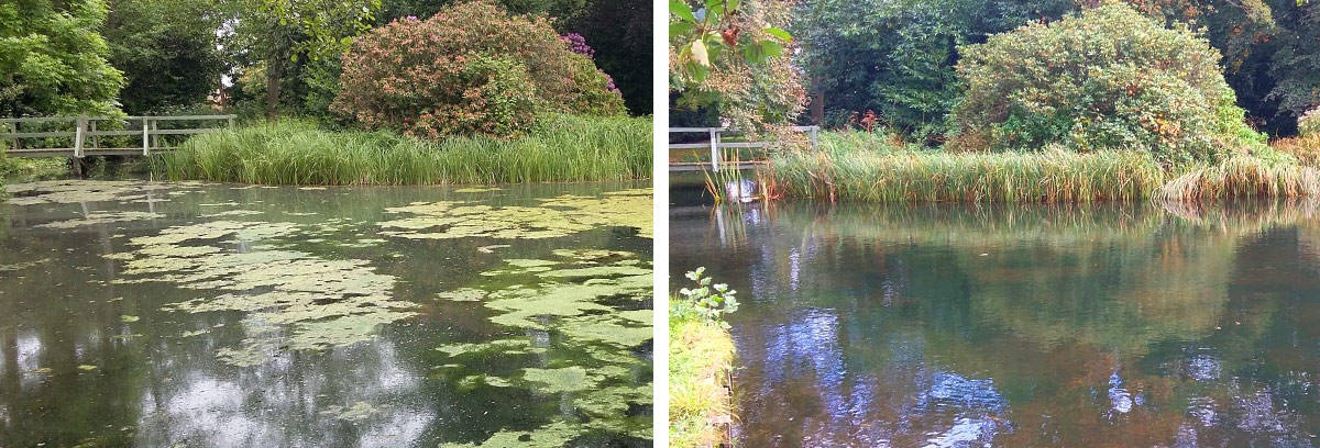 lake with algae before and after