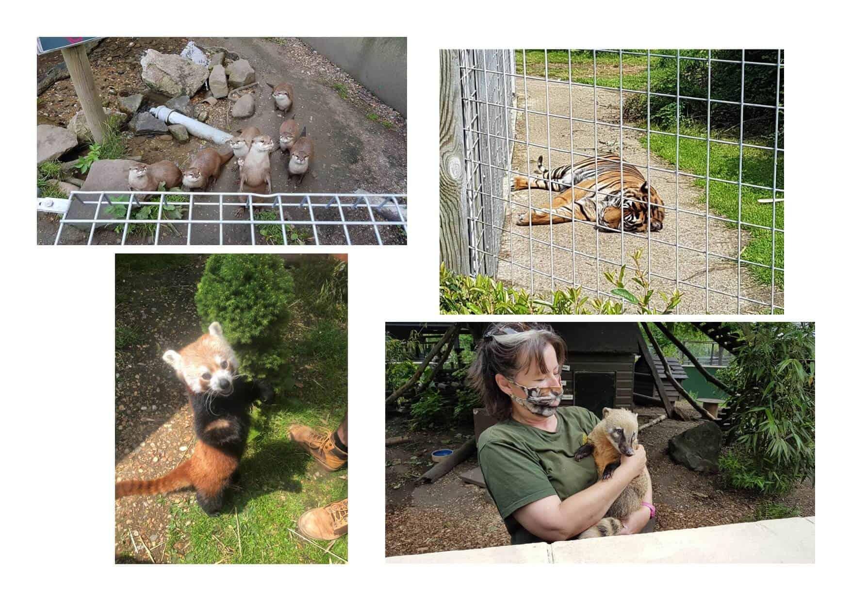 Animals at Shepreth Wildlife Park part 2